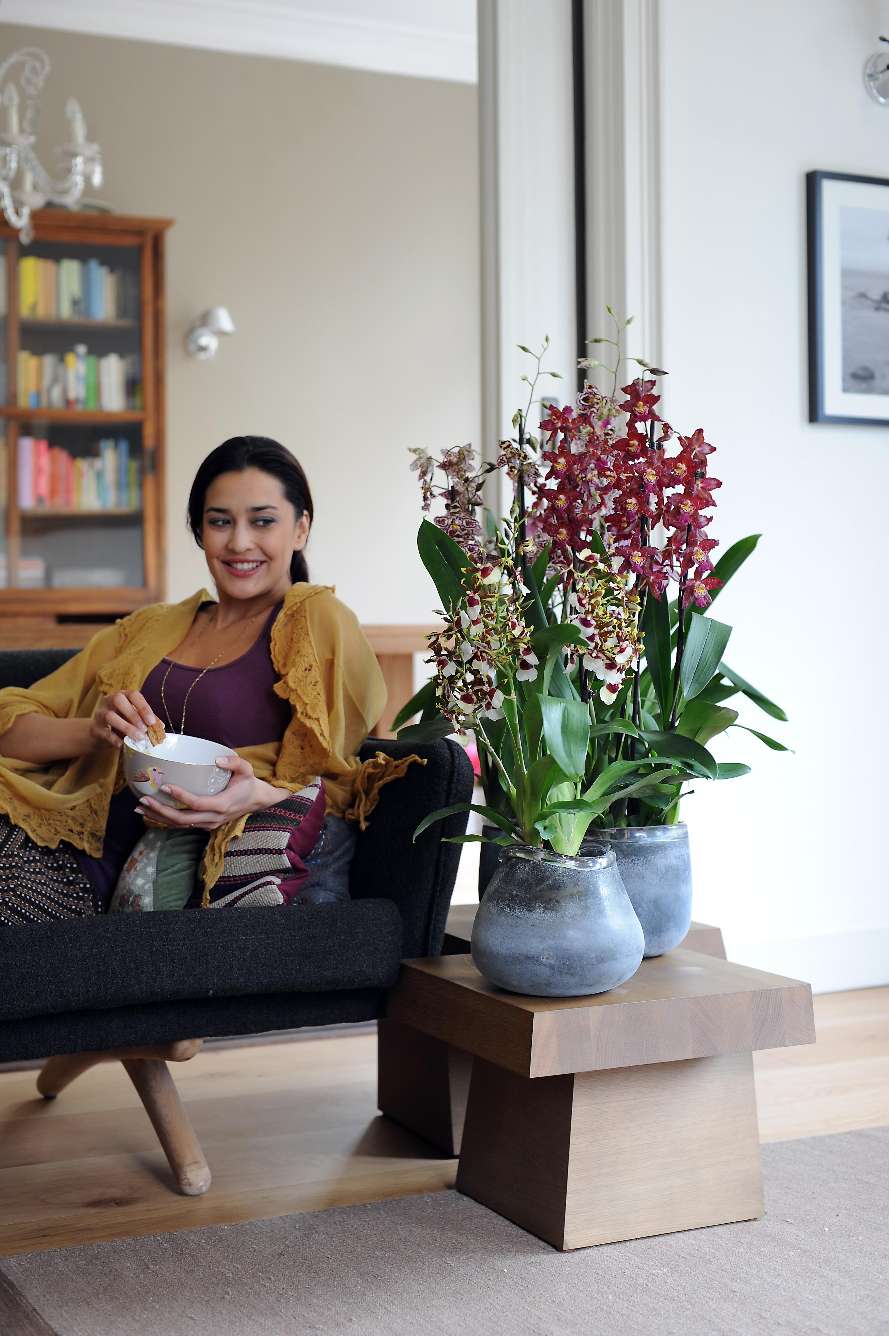 cambria ist zimmerpflanze des monats oktober eine smarte. Black Bedroom Furniture Sets. Home Design Ideas