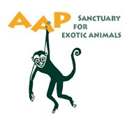 AAP Foundation