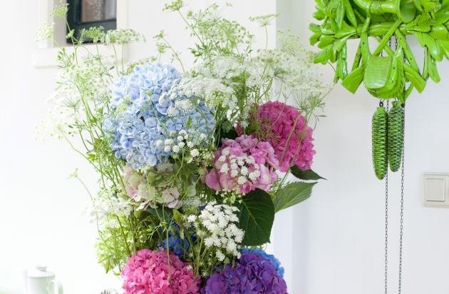 farbenvielfalt in der vase verwandlungsk nstlerin hortensie pressemitteilung blumenb ro. Black Bedroom Furniture Sets. Home Design Ideas