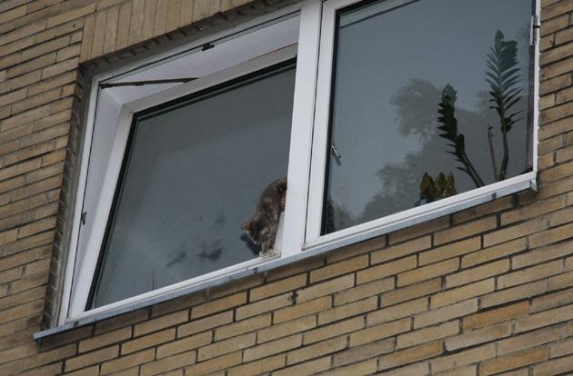 FW-E: Feuerwehr rettet Katze aus gekipptem Fenster und entdeckt dabei auch eine tote Katze