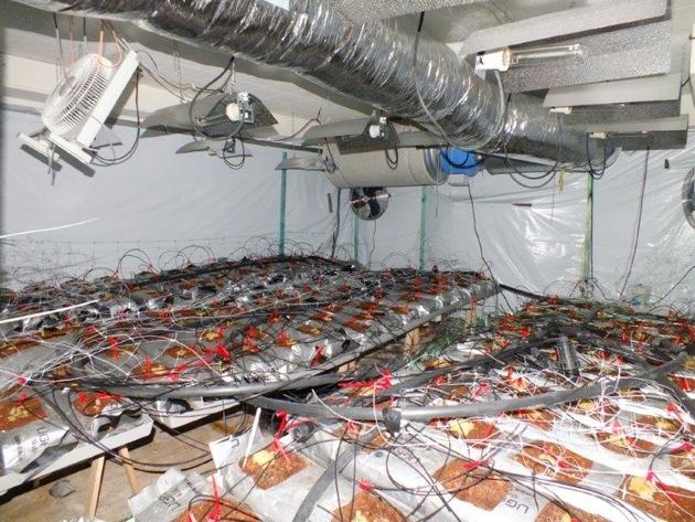 POL-SE: Norderstedt   / Polizei entdeckt Marihuana-Plantage im Keller eines Reihenhauses