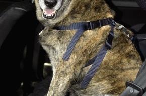 VIER PFOTEN - Stiftung für Tierschutz: VIER PFOTEN warnt vor Hitzeschock im Auto
