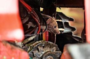 AUTO BILD: AUTO BILD-Reportage: Marder knabbern im Auftrag der Autoindustrie