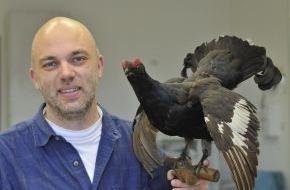 Deutsche Wildtier Stiftung: Huhn ohne Hoffnung? / Genetische Untersuchung belegt die Bedrohung der seltenen Birkhühner (FOTO)