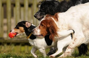 Bundesverband für Tiergesundheit e.V.: In diesem Jahr bleibt der Hund zu Hause / Hundepensionen verlangen umfassenden Impfschutz