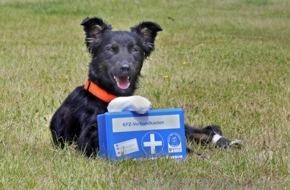 Bundesverband für Tiergesundheit e.V.: Erste Hilfe für Hunde: Alles im Griff / Schnelle Hilfe vor Ort ist gut, ein Besuch beim Tierarzt schafft Sicherheit