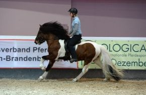 Messe Berlin GmbH: Hollywood setzt auf American Saddlebred Horses - Berlins Pferdesportevent HIPPOLOGICA stellt die Pferderasse vor