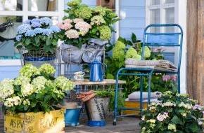 Blumenbüro: Stilvolle Romantik mit der Gartenhortensie / Die Gartenhortensie setzt dem Vintage-Chic das Krönchen auf
