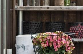 Blumenbüro: Farbexplosion auf Balkon und Terrasse / Gartenhortensien begrüßen die Outdoor-Saison