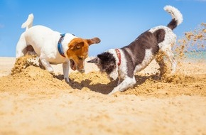 Bundesverband für Tiergesundheit e.V.: Unvergessliche Urlaubstage mit dem Hund / Aber auf einige Mitbringsel kann man gut verzichten