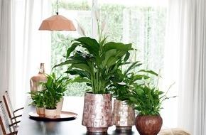 Blumenbüro: Einblatt ist Zimmerpflanze des Monats Juni / Das Einblatt sorgt für eine frische Brise