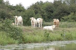 PAN Germany: Brüssel muss Weichen für effektiven Schutz der Umwelt vor Tierarzneimitteln stellen