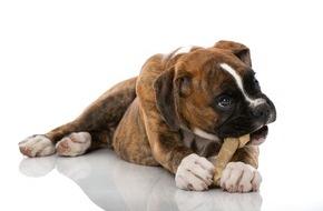 Bundesverband für Tiergesundheit e.V.: Keine Angst vorm Zahnarzt / Zahnpflege bei Hund und Katze beugt Schmerz und Krankheit vor