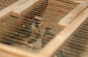 Komitee gegen den Vogelmord e. V.: Illegaler Handel mit Singvögeln bei Ebay - Behörden beschlagnahmen 15 Stieglitze in Oberhausen - Vogel des Jahres 2016