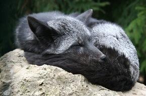Zürcher Tierschutz: Ein Jahr Pelz-Deklaration: Modehäuser sind überfordert