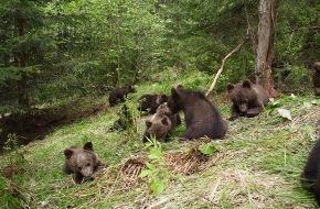 VIER PFOTEN - Stiftung für Tierschutz: Drei Bärenkinder aus Serbien kommen in die BÄRENWAISENSTATION Harghita