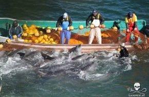 Journal Society GmbH: Dramatisches Delfinmorden in Japan - US-Botschaft interveniert