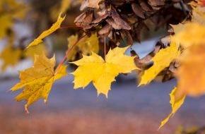 HUK-Coburg: Tipps für den Alltag: Wenn die Blätter fallen / Herbstlaub kann Straßen in rutschige Flächen verwandeln