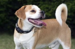 Bundesverband für Tiergesundheit e.V.: Chaos im Gehirn / Epilepsie ist die häufigste chronische neurologische Erkrankung beim Hund