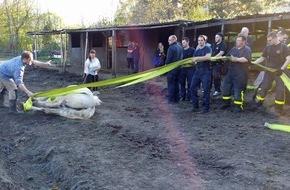 Feuerwehr Gelsenkirchen: FW-GE: Pferderettung in Gelsenkirchen Beckhausen - Feuerwehr hilft Stute Nanni zurück auf die Beine