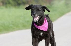 Bundesverband für Tiergesundheit e.V.: Tiefenentspannt in den Urlaub / Nicht jeder Hund verträgt das Autofahren, aber für empfindliche Hunde gibt es Reisetabletten