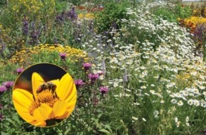 """Deutscher Imkerbund e. V.: Gesunde Bienen brauchen bunte Vielfalt - Kernthema beim """"Tag der deutschen Imkerei"""""""