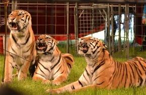 """Aktionsbündnis """"Tiere gehören zum Circus"""": Tiere im Zirkus: Aktionsbündnis wirft dem Stadtrat von Hameln oberflächliches und leichtfertiges Verhalten vor"""