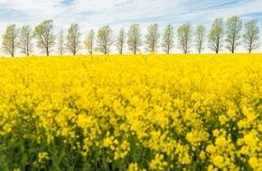 UFOP e.V.: Rapsblüte 2015: Großes Rohstoffpotenzial sichert auch zukünftig Nachschub für Teller, Trog und Tank
