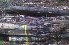 Polizeiinspektion Cuxhaven: POL-CUX: Brennholzdiebe im Forst unterwegs