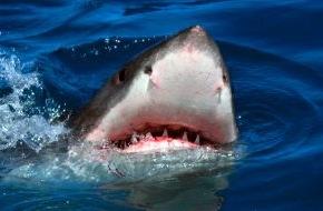 """kabel eins: Ein echtes """"HaiLight"""": Haifisch-Spezialwoche bei kabel eins ab 22. September 2014 / Free-TV-Premiere von """"Dark Tide"""" mit Halle Berry und Olivier Martinez und Dokus rund um den Schrecken der Meere"""