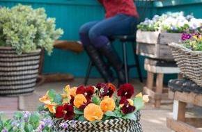 Blumenbüro: Mit Tagetes & Co. die letzten warmen Tage im Draußen-Wohnzimmer genießen / Mit leuchtenden Gartenblühern den Herbst zelebrieren