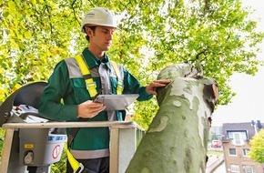 Dekra SE: Unterschätzte Bruchgefahr: Jeder vierte Baum ist ein Sicherheitsrisiko / DEKRA zieht Fazit nach 85.000 Baumkontrollen