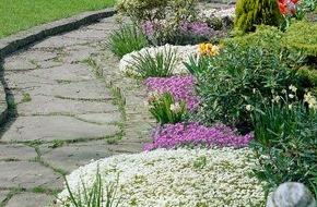 Blumenbüro: Blaukissen und Steinbrech eröffnen die Gartensaison / Flächendeckende Pracht für Boden und Beet