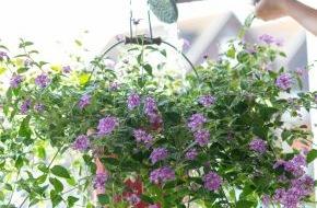 Blumenbüro: Clevere Bepflanzungen mit farbenfrohen Gartenblühern / Urban Gardening: Grüne Oase für kleine Balkone