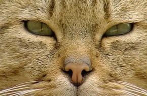 SWR - Südwestrundfunk: Das geheime Leben der Katzen