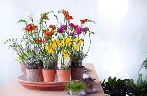 """Blumenbüro: """"Connect the Story"""": Die charmante Schönheit in naturverbundener Atmosphäre / Wild und duftend: Die Freesie begeistert die Sinne"""