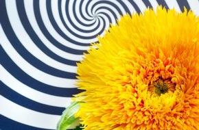 Blumenbüro: Sonnenblumen für Schwarz-Weiß-Liebhaber / Kontraststarke Inszenierung der Sommerblume