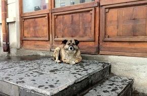 VIER PFOTEN - Stiftung für Tierschutz: Offizielles Dokument zeigt: Rumänisches Kind wurde nicht von Streunern getötet / VIER PFOTEN fordert von Ministerpräsident Ponta Abschaffung des Streunerhunde-Tötungsgesetzes