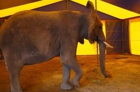"""Aktionsbündnis """"Tiere gehören zum Circus"""": Aktionsbündnis """"Tiere gehören zum Circus"""": Tragischer Unfall darf nicht als Argument für Wildtierverbot missbraucht werden"""