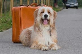 Bundesverband für Tiergesundheit e.V.: Hunde sind auch nur Menschen / Was tun, wenn der Hund unter Reisekrankheit leidet
