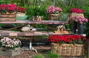 Blumenbüro: Überraschend draußen: Bohemian Style mit der Betulia / Spannender Stilmix mit der Schwester der Begonie