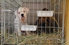 VIER PFOTEN - Stiftung für Tierschutz: Welpenmafia: VIER PFOTEN warnt vor illegalem Hundehandel!