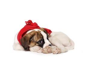 Allianz Global Assistance: Welthundetag: Mehr Sicherheit für das beliebteste Haustier der Deutschen