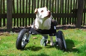 Multec GmbH: Rollstuhl aus dem 3D-Drucker für Hündin Luisa / Multec entwickelt einen Rollstuhl aus dem 3D-Drucker für Hündin ohne Vorderbeine