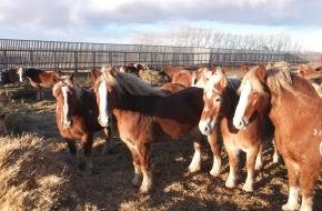 Migros-Genossenschafts-Bund: Migros arrête les importations de viande de cheval provenant de l'élevage Bouvry/Canada