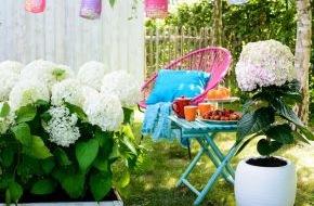 Blumenbüro: Cooler Look für den Sommergarten / Wie Schneeflocken im Sommer: Weiße Gartenhortensien