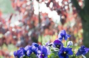 Blumenbüro: Tipps und Tricks zur Überwinterung der Balkon- und Terrassenpflanzen / Winterschlaf für Gartenblüher: So überstehen Ihre Lieblinge im Topf die kalte Jahreszeit (FOTO)