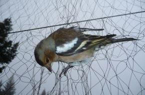 Komitee gegen den Vogelmord e. V.: Italien verbietet den Vogelfang / Die letzten 92 Fanganlagen müssen heute geschlossen werden