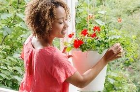 Blumenbüro: Pflanzenfreude.de kürt Balkon- und Terrassenpflanze des Jahres 2016 - Geranie und Hibiskus als optimales Outdoor-Duo