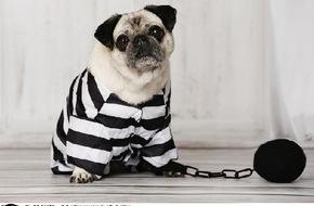 VIER PFOTEN - Stiftung für Tierschutz: Fasnacht, aber bitte ohne Hundetracht